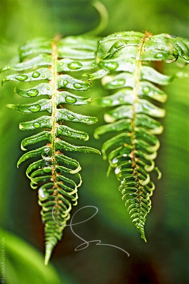 Fern in Harmony - 'Selected for Exhibition' PPOC-BC 2001. Surrey, BC Canada
