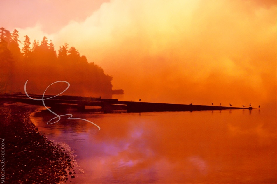 Apricot Sunset - 'Selected for Exhibition' PPOC-BC 2004. Surrey, BC Canada