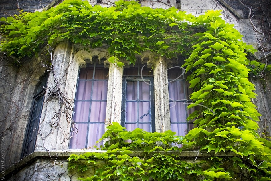 Ivy Window-'Selected for Exhibition' PPOC-BC 2007. Toronto, ON Canada