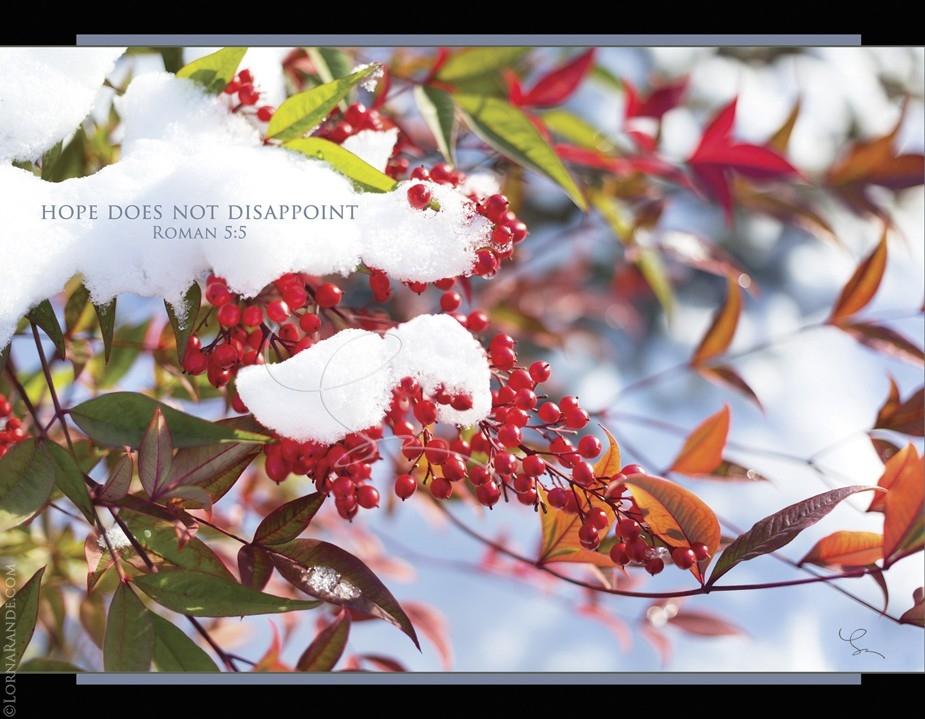 Floral - December