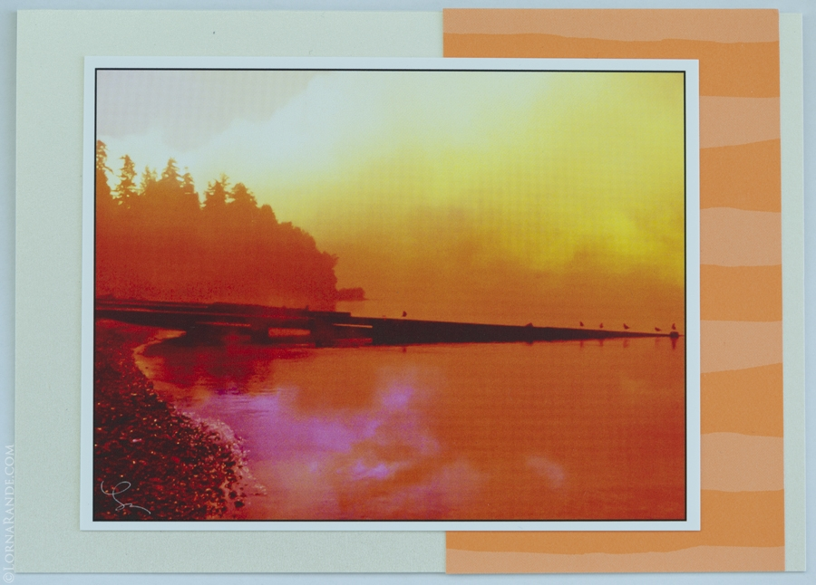 'Apricot Sunset' Surrey, BC