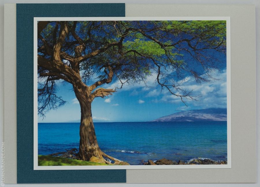 'Kamaole Beach Tree' Kihei, Maui, HI