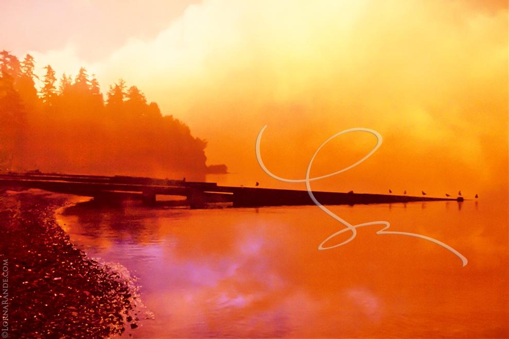 'Apricot Sunset' Crescent Beach, Surrey, BC